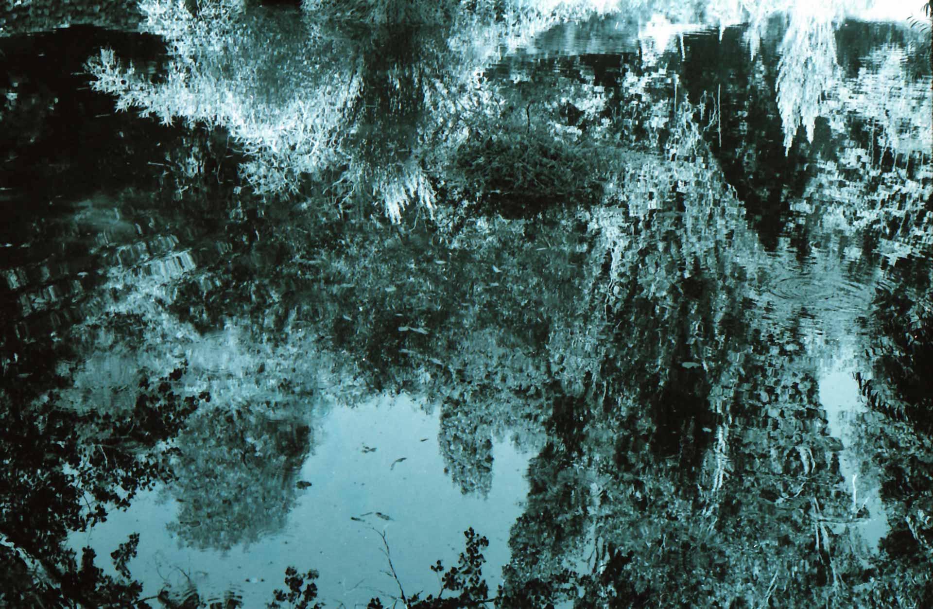 Natural equivalences n°2- San Leonardo de Siete Fuentes 2005